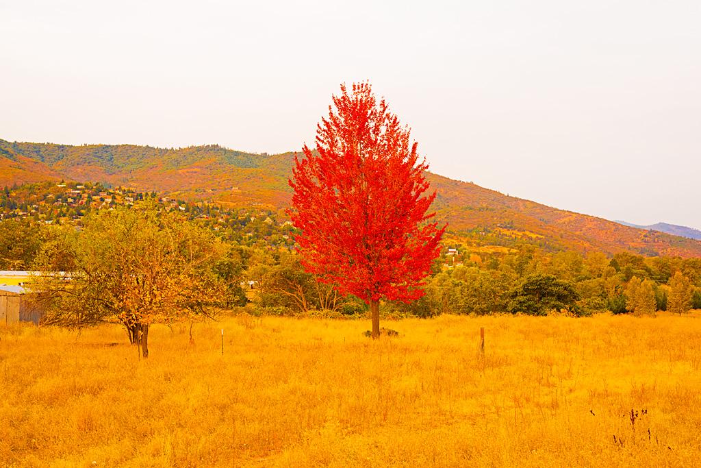 Stock Photo Fall Foliage In Oregon