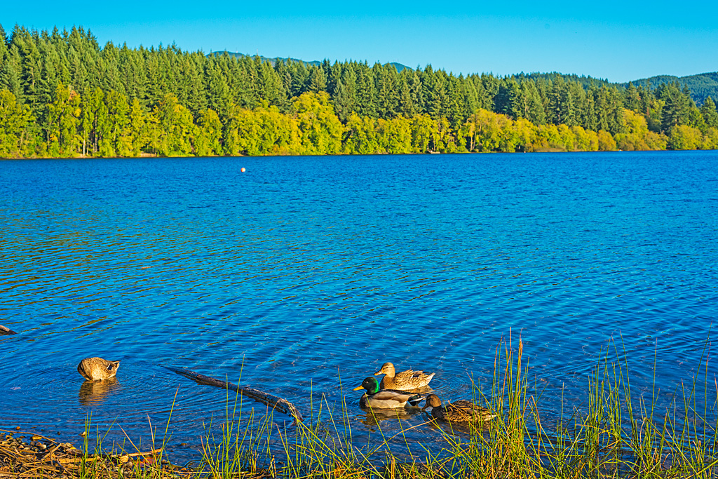Lake Padden Bellingham Washington
