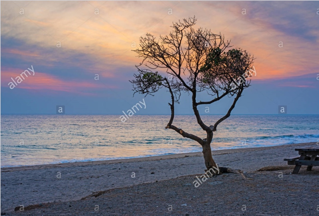 Purple Sunset Tree Beach