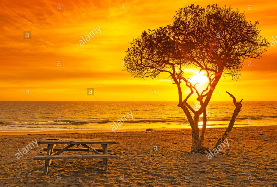 Yellow Orange Sunset Tree Table